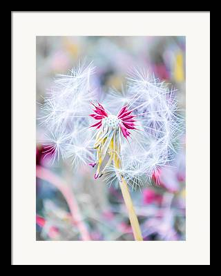 Spring Framed Prints