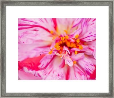 Pink Framed Print by David Waldrop