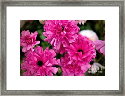 Framed Print featuring the photograph Pink by Diana Mary Sharpton