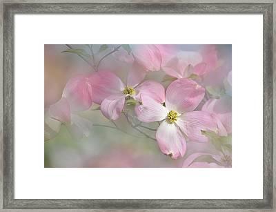 Pink Dogwood 02 Framed Print by Ann Bridges