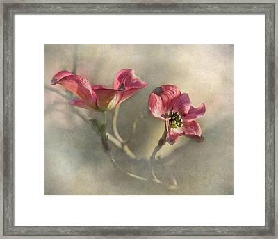 Pink Dogwood Framed Print by Angie Vogel