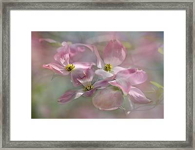 Pink Dogwood Framed Print by Ann Bridges
