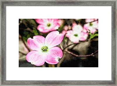 Pink Dogwood Painting Framed Print