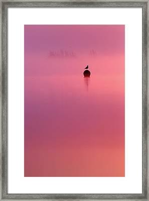 Pink Dream - Gull Silhouet At Sunrise Framed Print by Roeselien Raimond