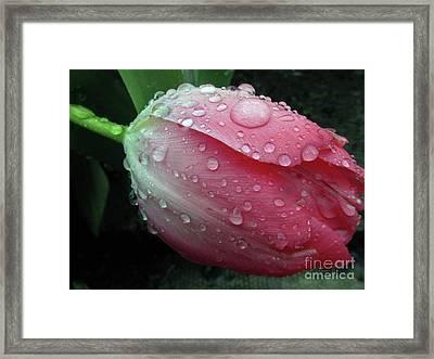 Pink Drops #2 Framed Print