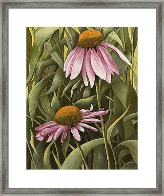 Pink Echinaceas Framed Print by Mary Ann King