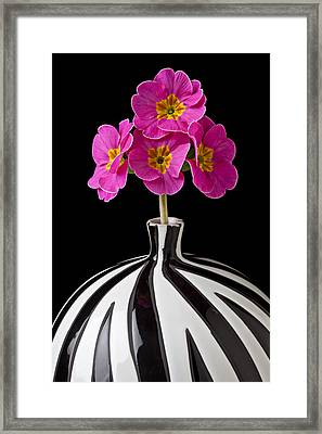 Pink English Primrose Framed Print by Garry Gay