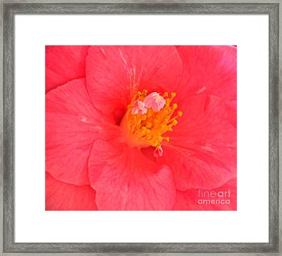 Framed Print featuring the photograph Pink by Erica Hanel