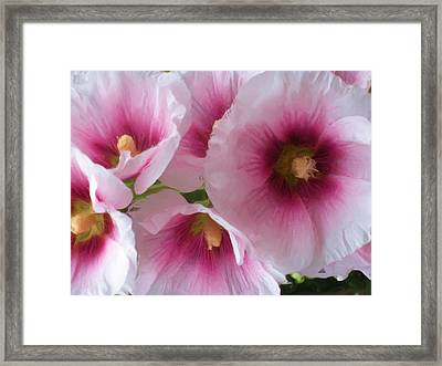 Pink-faced Hollyhocks Framed Print