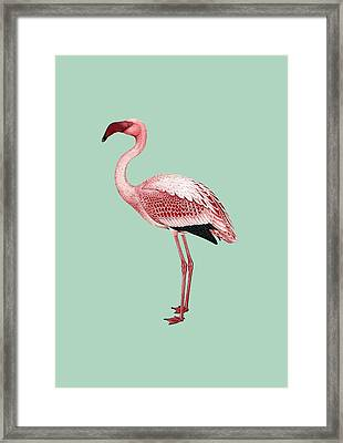 Pink Flamingo Isolated Framed Print