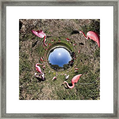 Pink Flamingo Rabbit Hole Framed Print