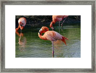 Framed Print featuring the photograph Pink Flamingo by Scott Carruthers