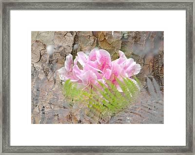 Pink Flower Bark Framed Print