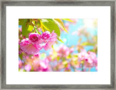 Pink  Flower Beautiful Framed Print