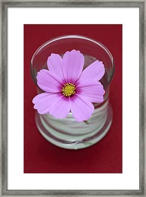 Pink Flower Framed Print by Frank Tschakert