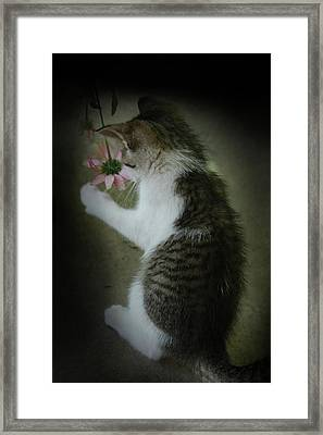 Pink Flower Framed Print by Kim Henderson