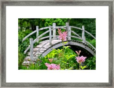 Pink Flower Framed Print by Robert Joseph