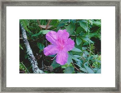 Pink Flower Framed Print by Tara Kearce