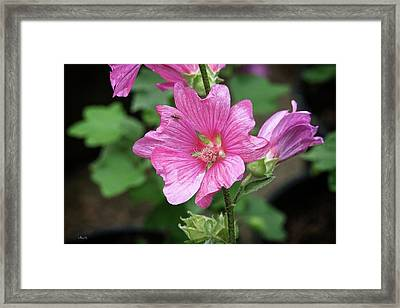 Pink Flower With Bug. Framed Print
