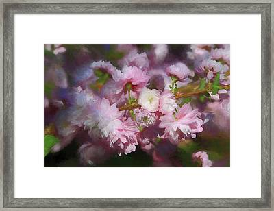 Framed Print featuring the photograph Pink Flowering Almond by Donna Kennedy
