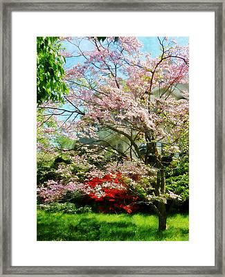 Pink Flowering Dogwood Framed Print by Susan Savad