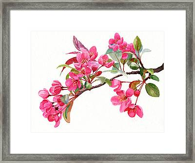 Pink Flowering Tree Blossoms Framed Print