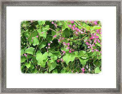 Framed Print featuring the photograph Pink Flowering Vine1 by Megan Dirsa-DuBois