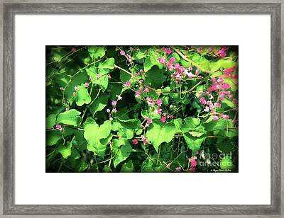 Framed Print featuring the photograph Pink Flowering Vine2 by Megan Dirsa-DuBois