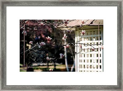 Pink Flowers At Gazebo Framed Print by Helena M Langley
