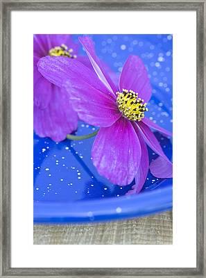 Pink Flowers Framed Print by Frank Tschakert
