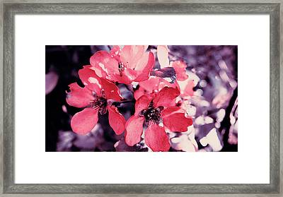 Pink Flowers Framed Print by Nat Air Craft