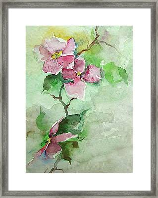 Pink Flowers On Branch Framed Print by Robin Miller-Bookhout