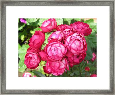 Pink Flowers Framed Print by Richard Mitchell