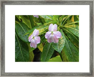Framed Print featuring the photograph Pink Flowers Under The Rain by Manuela Constantin