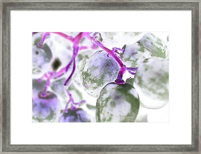 Pink Fluorescence Framed Print by Monica Palermo