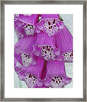 Pink  Foxglove Framed Print by Diane E Berry