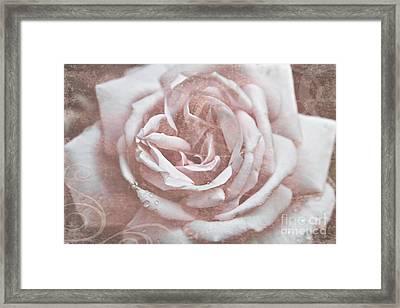 Pink Garden Rose Framed Print