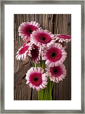 Pink Gerbera Daisies Framed Print
