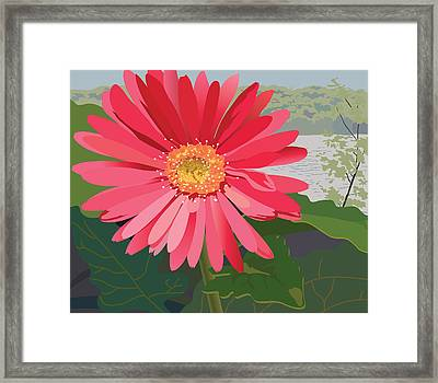 Pink Gerbera Daisy Framed Print by Marian Federspiel