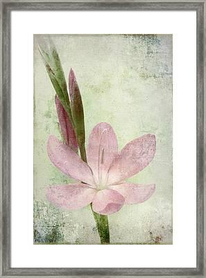 Pink Gladiolus On Green Framed Print