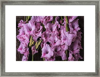 Pink Glads With Yellow Butterfly Framed Print by Garry Gay