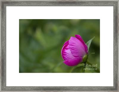 Pink Globe Framed Print
