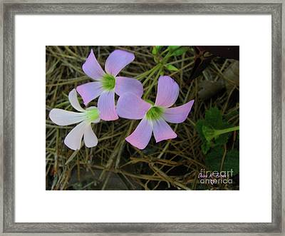 Framed Print featuring the photograph Pink Glow by Donna Brown