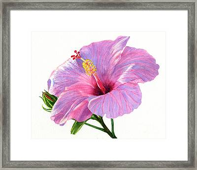 Pink Hibiscus Blossom With Blue Shadows Framed Print by Sharon Freeman