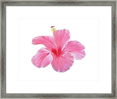 Framed Print featuring the painting Pink Hibiscus by Elizabeth Lock