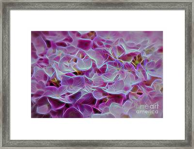 Pink Hydrangea Glow Framed Print