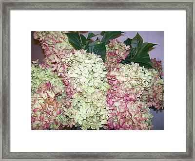 Framed Print featuring the digital art Pink Hydrangeas by Barbara S Nickerson