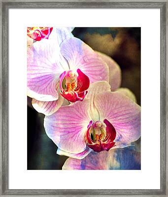 Pink In A Row Framed Print by Marty Koch