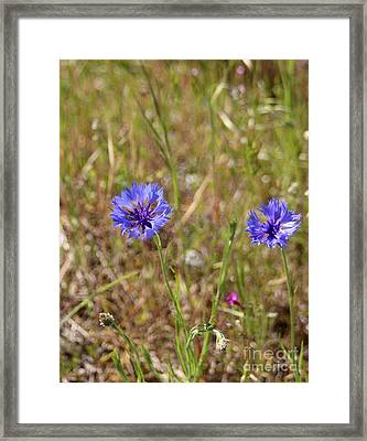 Framed Print featuring the photograph Pink In Between by Marie Neder