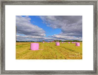 Pink In The Field Framed Print